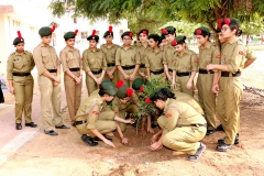 TREE PLANTATION 2018